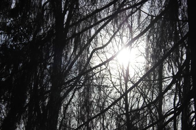 Bayrischer Wald - WeekendGetaway